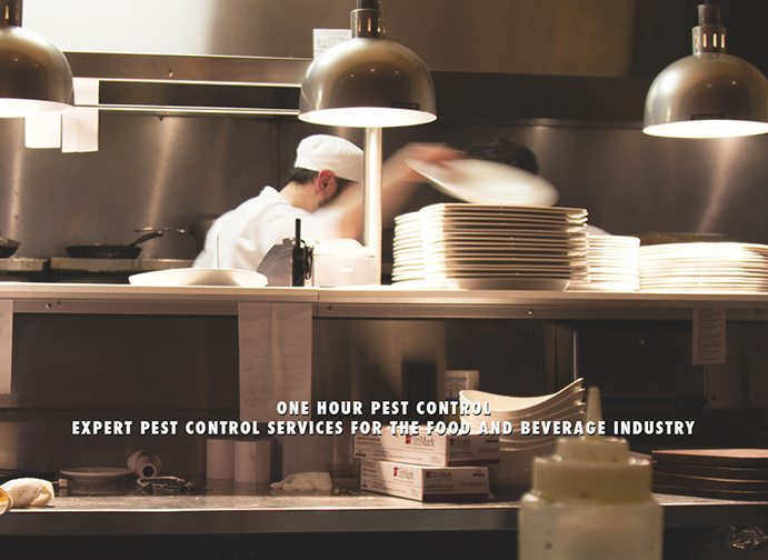 NJ Pest Control - New Jersey Exterminators
